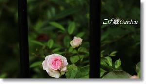 IMG_1341_R_R.jpg