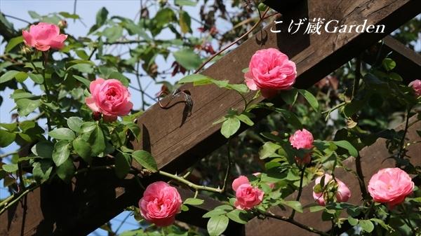 IMG_1368_R.jpg