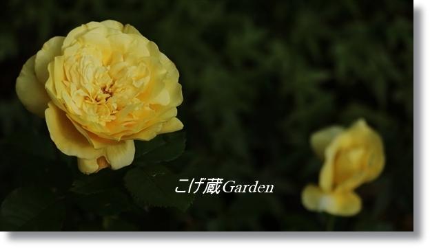 IMG_2101_R.jpg
