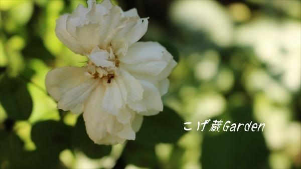IMG_2174_R.jpg