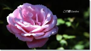 IMG_2279_R.jpg