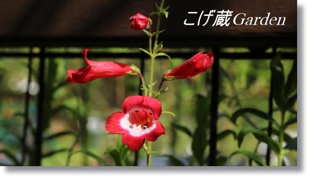 IMG_3028_R.jpg