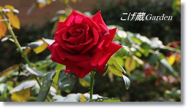 IMG_3045_R.jpg