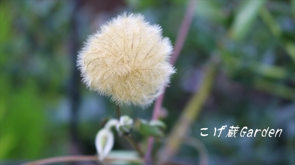 IMG_3361_R.jpg