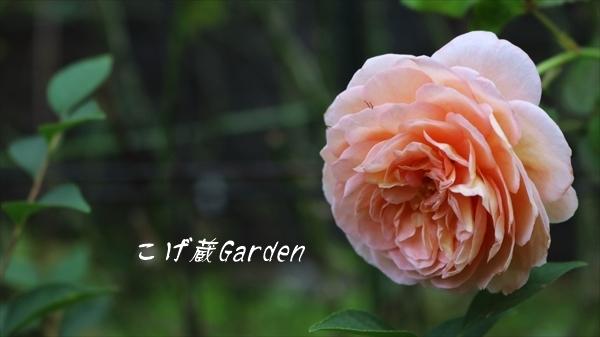 IMG_3370_R.jpg