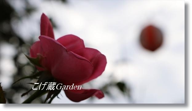 IMG_3389_R.jpg