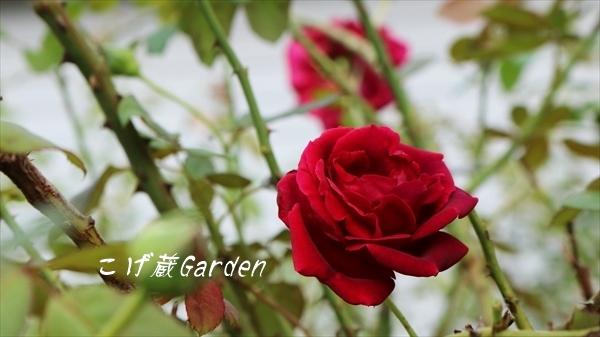 IMG_3401_R.jpg