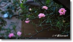 IMG_5039_R.jpg
