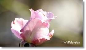 IMG_5081_R.jpg