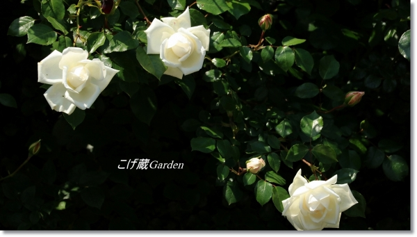 IMG_6164_R.jpg