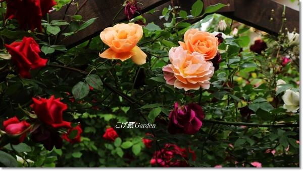 IMG_6697_R.jpg