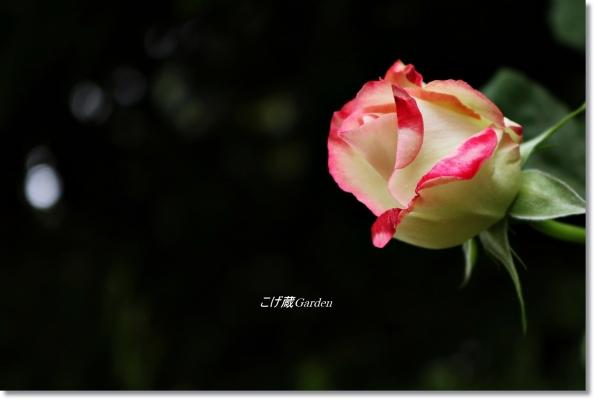 IMG_7434_R.jpg