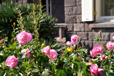 古河庭園バラ