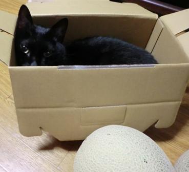 メロン猫1