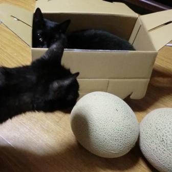 メロン猫2