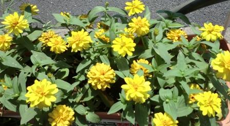 道の花盛り1