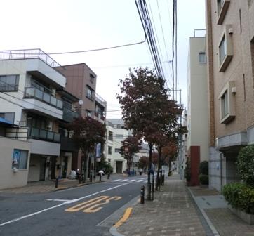 十条街路樹1