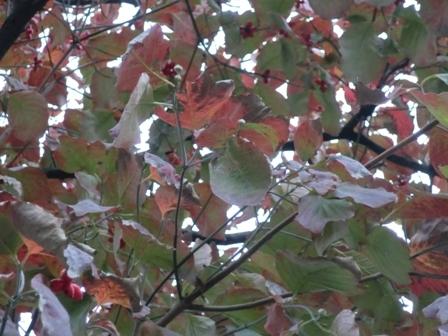 十条街路樹2
