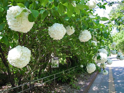 写真:ムーシューチューの花2。