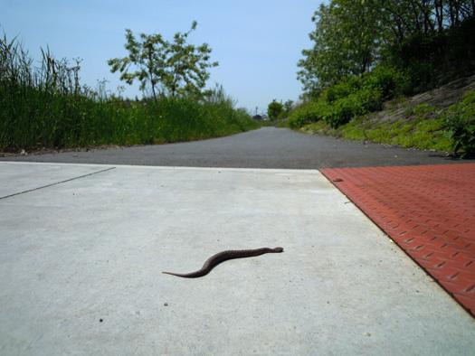 写真:矢田川サイクリングロード-2。