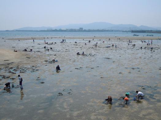 竹島での潮干狩り。
