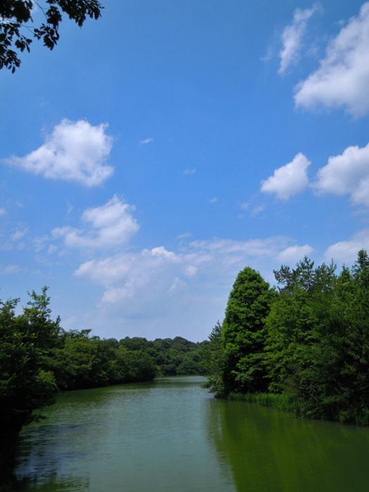 写真:岩本池。