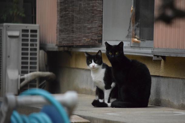 猫17,18