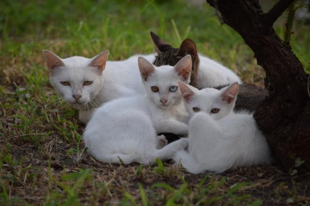 猫7,8,11,12,13