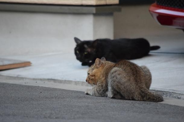 猫2,11