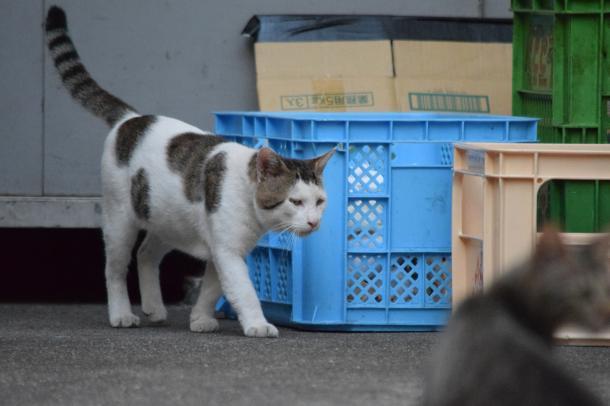 猫14,15