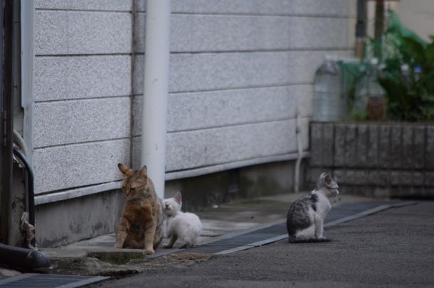 猫31,32,33