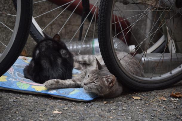 猫19,20