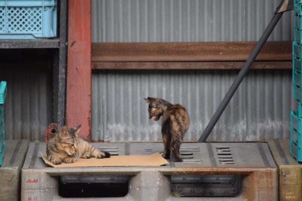 猫26,27