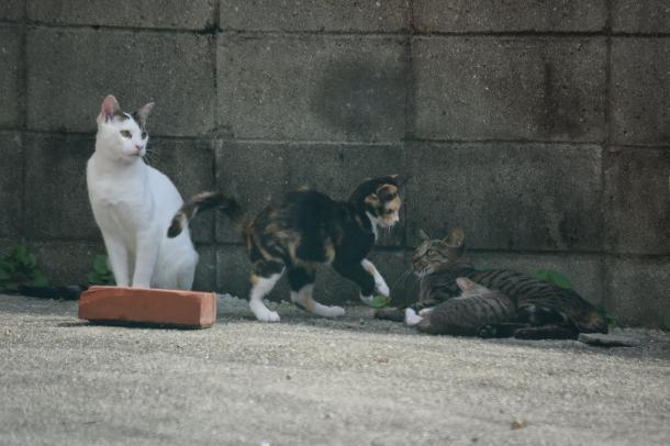 猫5,6,7,8