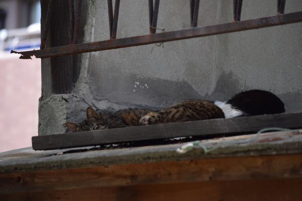 猫18,19,20