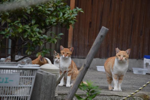 猫23,24,25,26