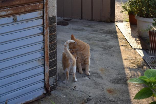 猫12,17
