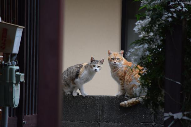 猫9,10