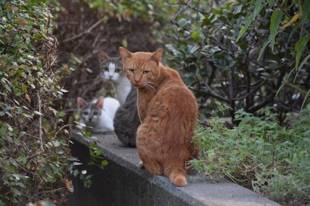 猫14,15,16