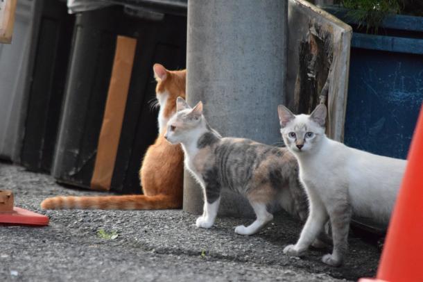 猫14,16,17
