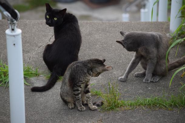 猫9,10,11