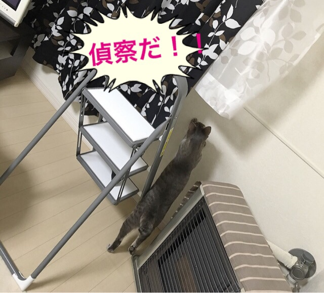 fc2blog_20160831190818b75.jpg