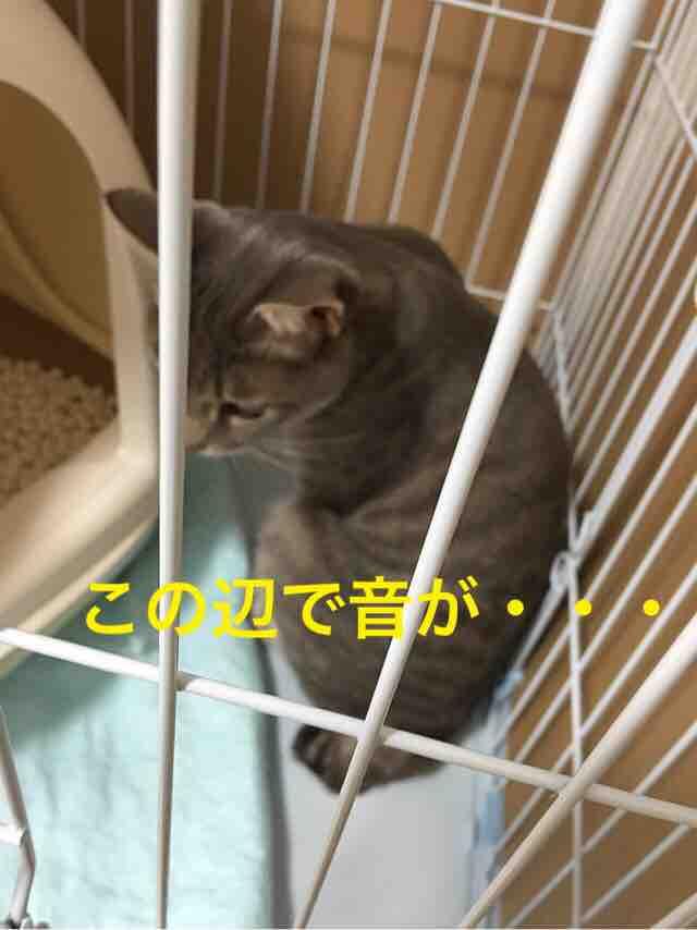 fc2blog_20160928193219aac.jpg