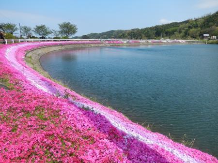 逢坂 大堤池の芝桜
