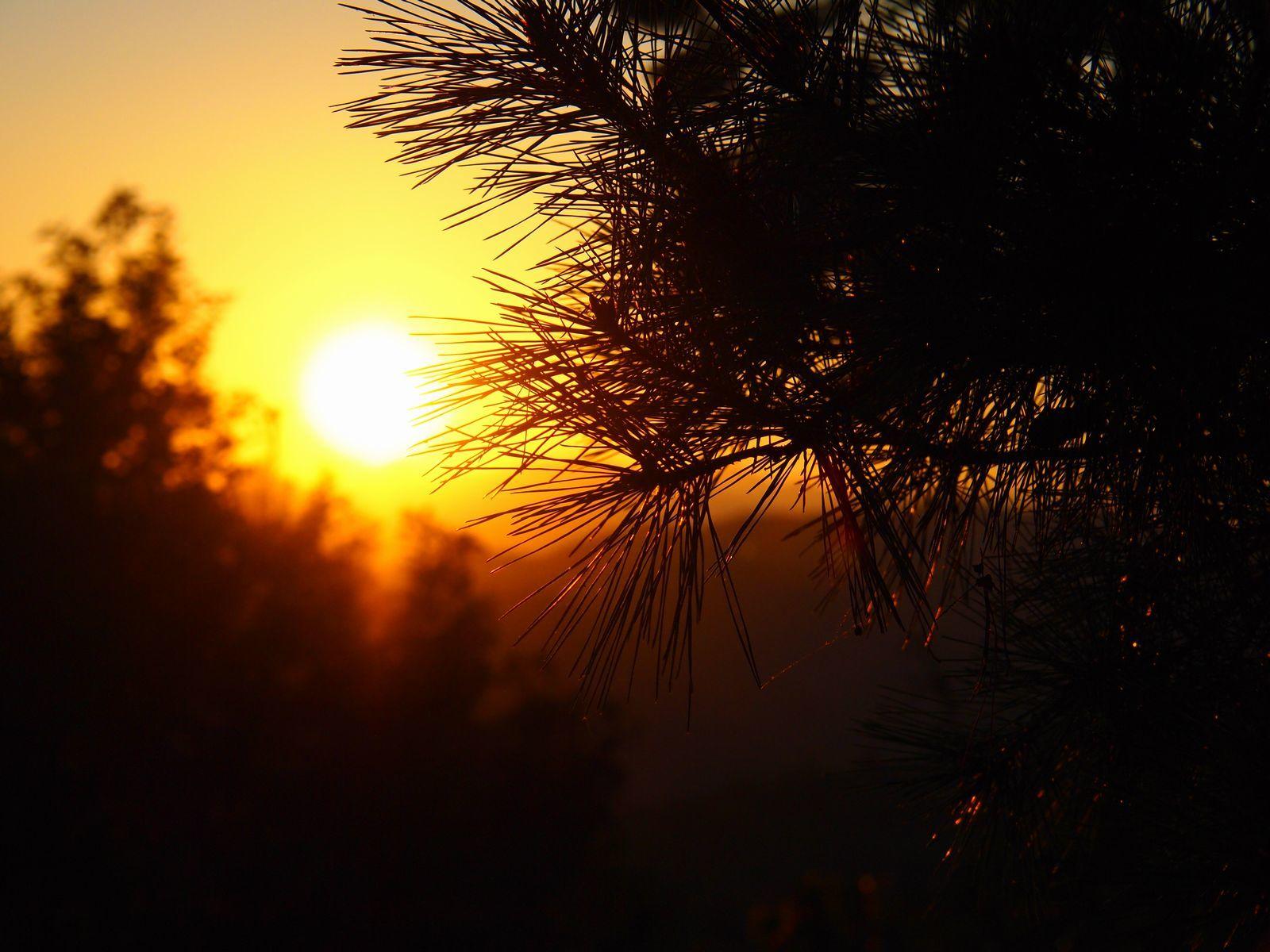 松野葉と夕日