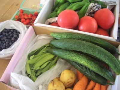 実家からの野菜