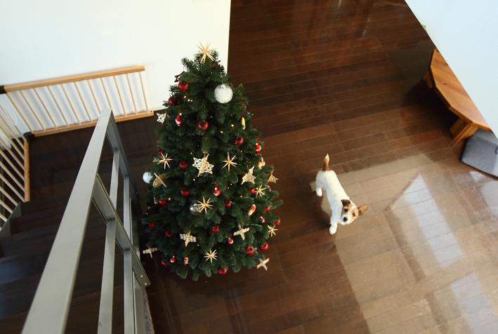 tree6_20161104001206d59.jpg
