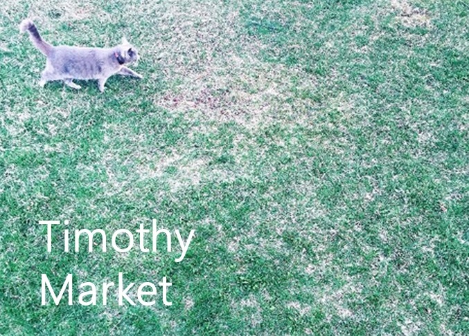 201606TimothyMarket