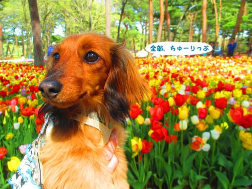 2016-4-hitachi27.jpg