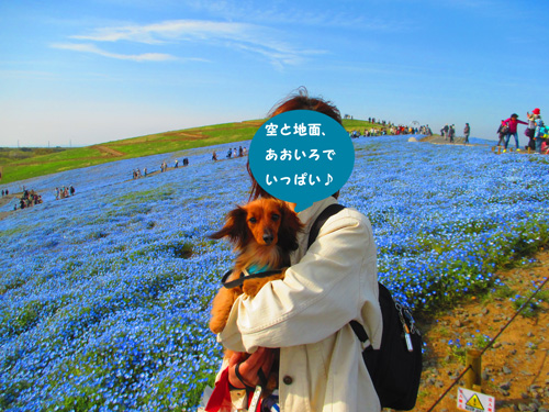 2016-4-hitachi40.jpg